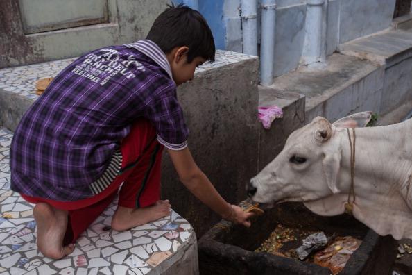 India beef ban