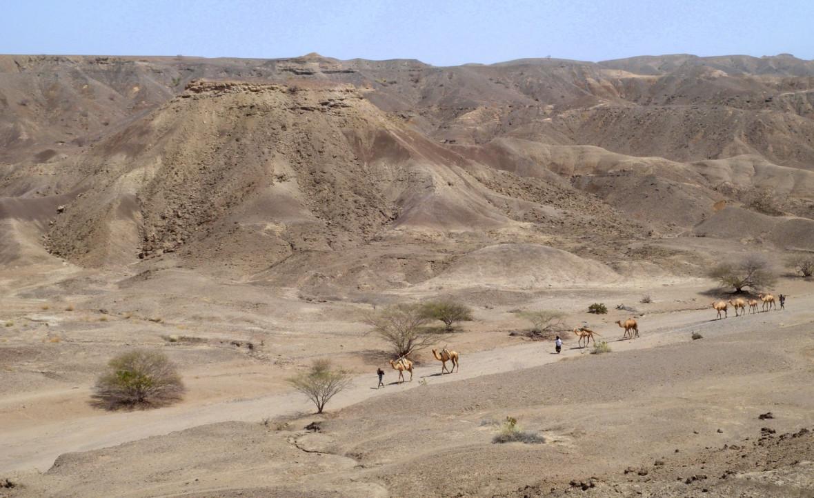 earliest homo fossil