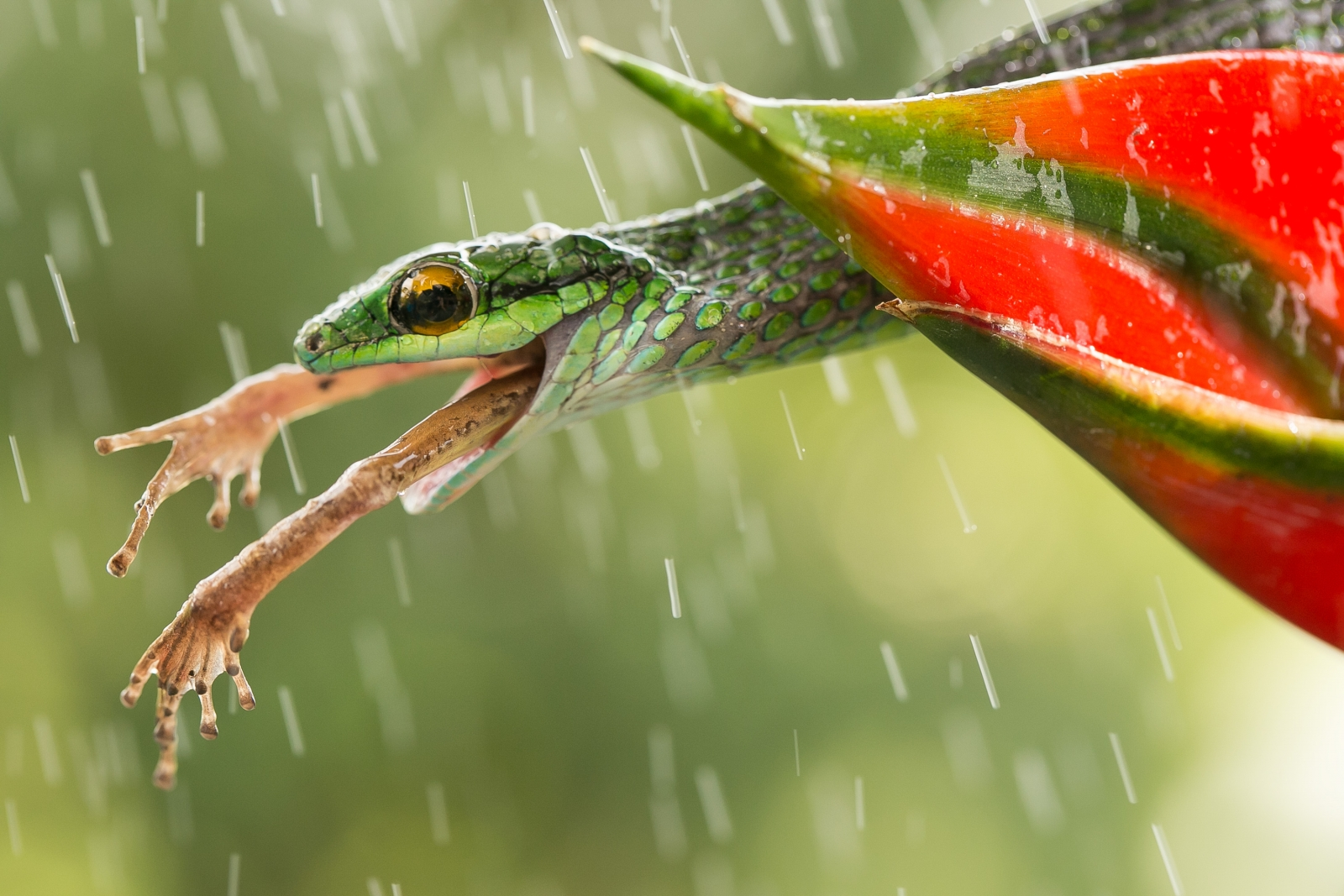 Smithsonian photo contest 2015