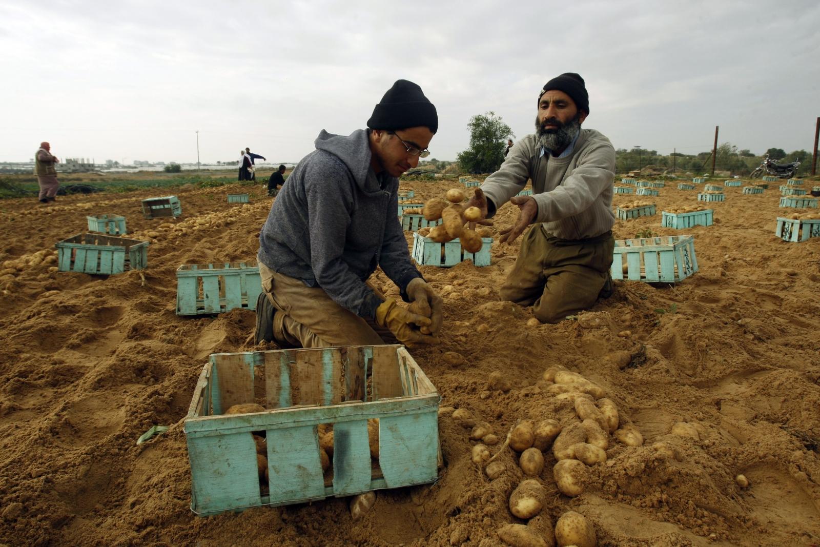 Gaza farmers