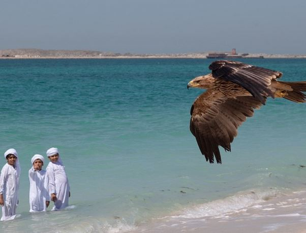 Darshan the eagle in Dubai