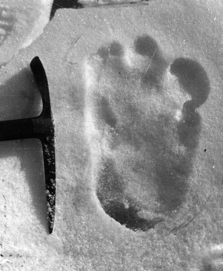 bigfoot or yeti footprint