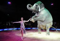 animal circus ban Mexico
