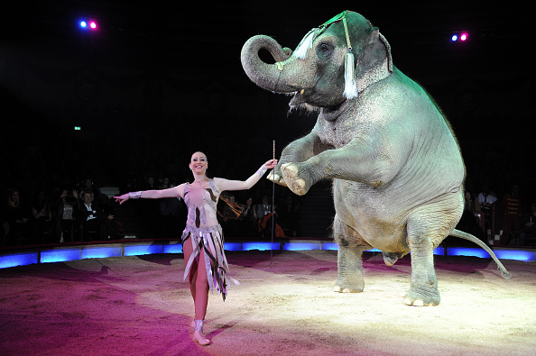 animal circus ban Mexico