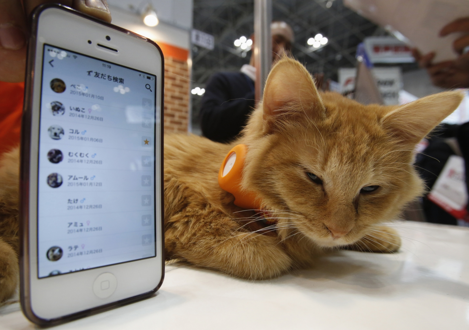 Internet of Things will monitor pets soon