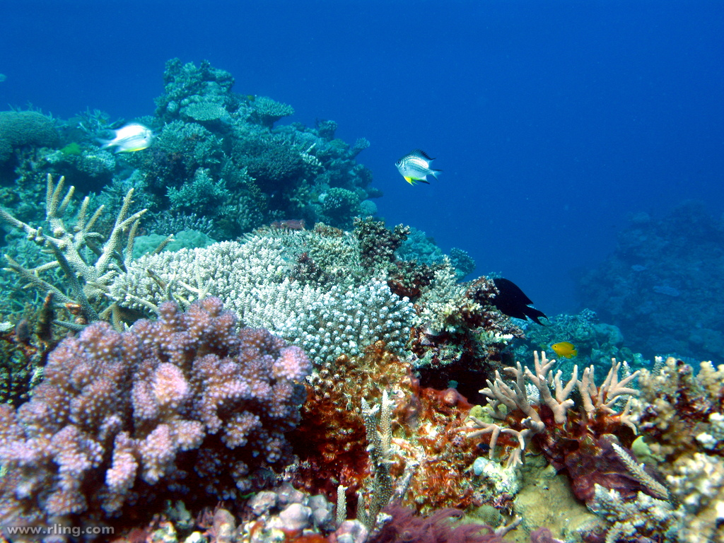 Great Barrier Reef: Obituary does not mean coral reef ...