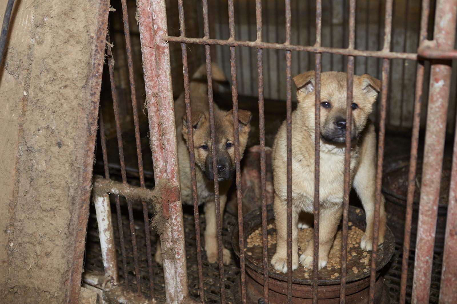 Dog rescue farm S.Korea