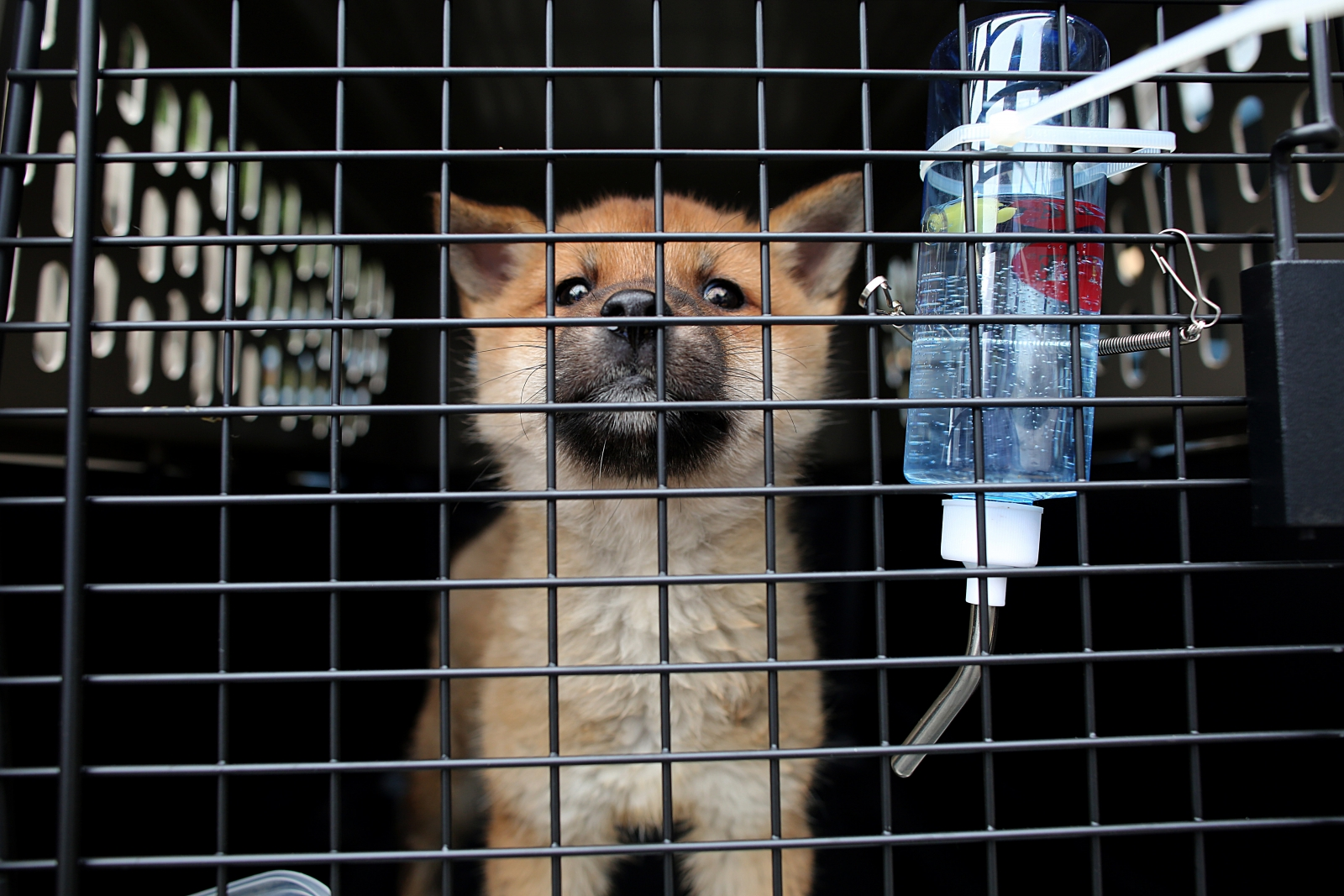 dog meat farm rescue S.Korea