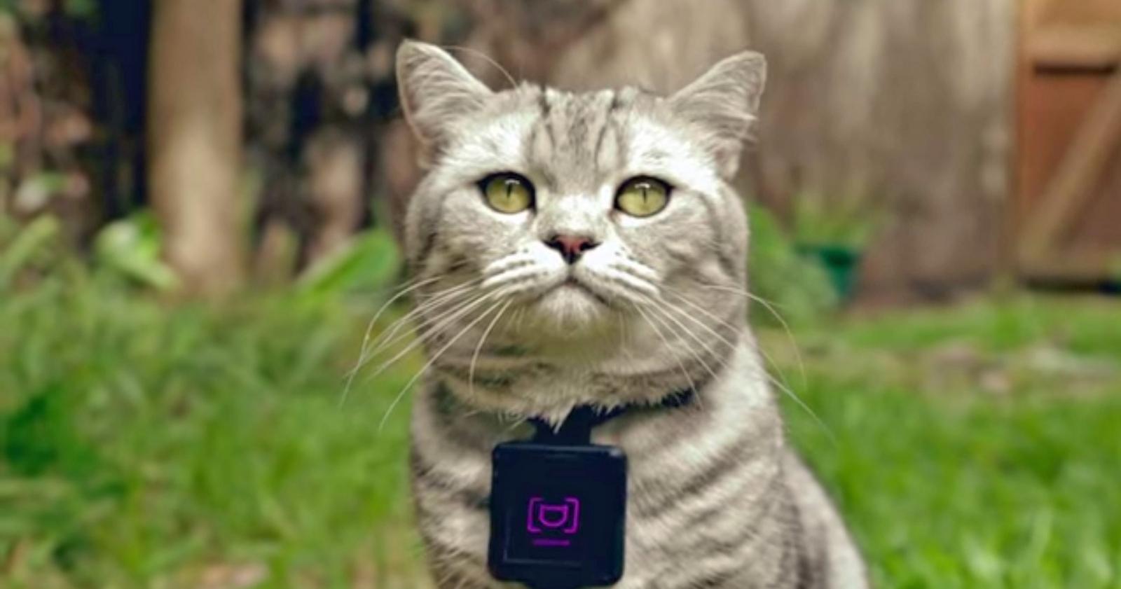 Catstacam: A camera for cats