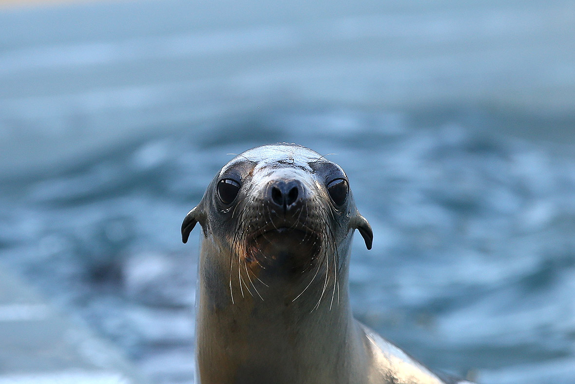 Swimmer rescued after being bitten by sea lion