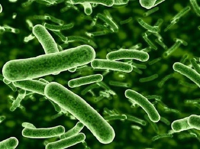 darpa thor antibiotics resistance