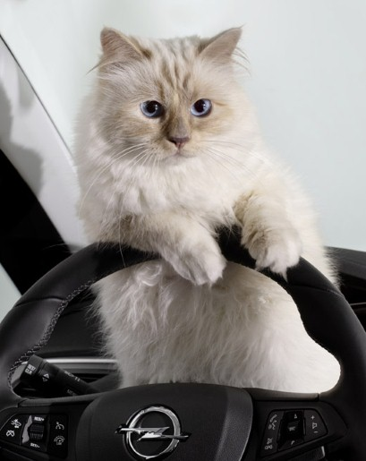 Is Choupette Lagerfeld The Worlds Richest Cat Karl Lagerfelds