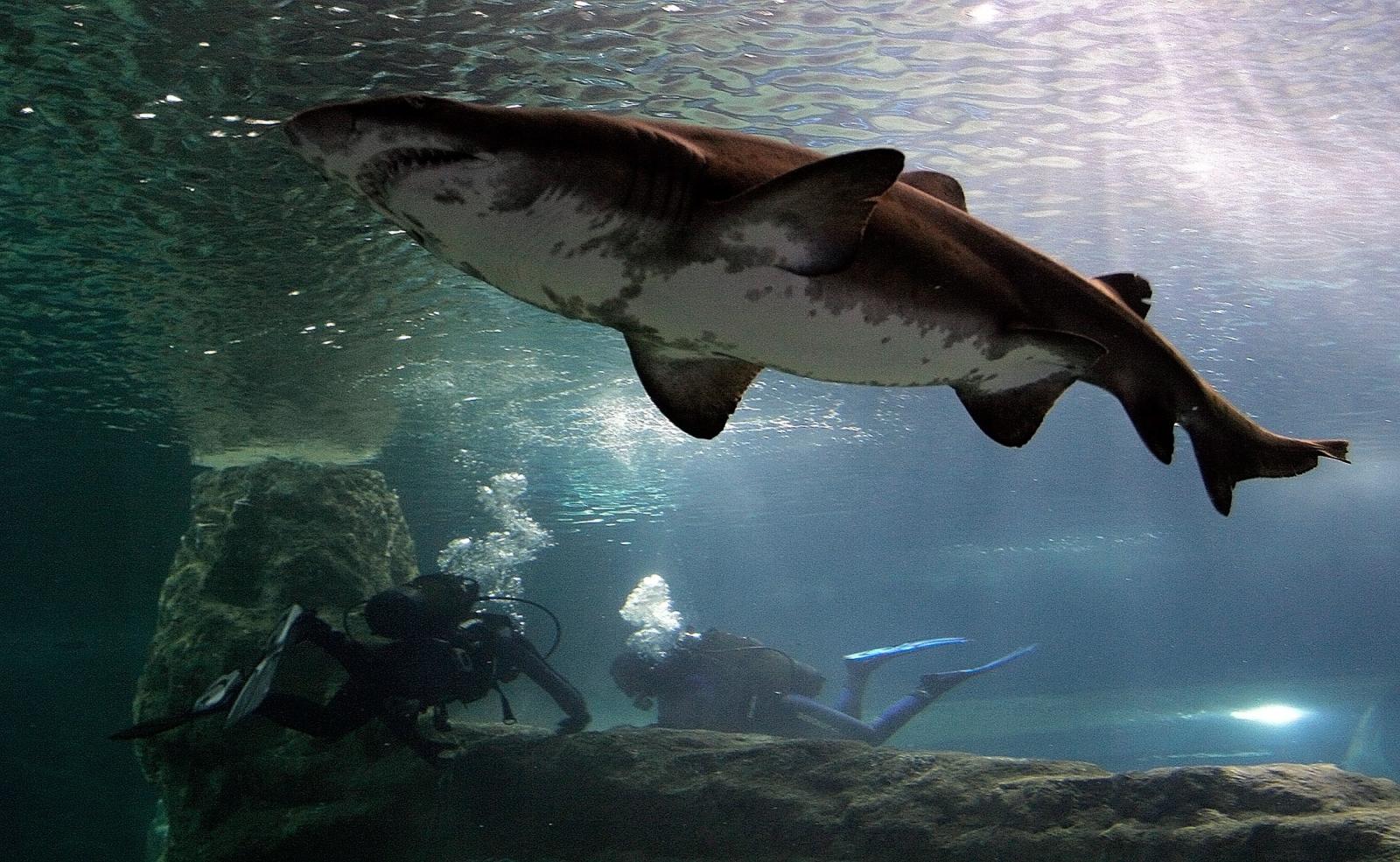 Florida man survives shark attack