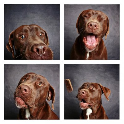 Photo booth dogs