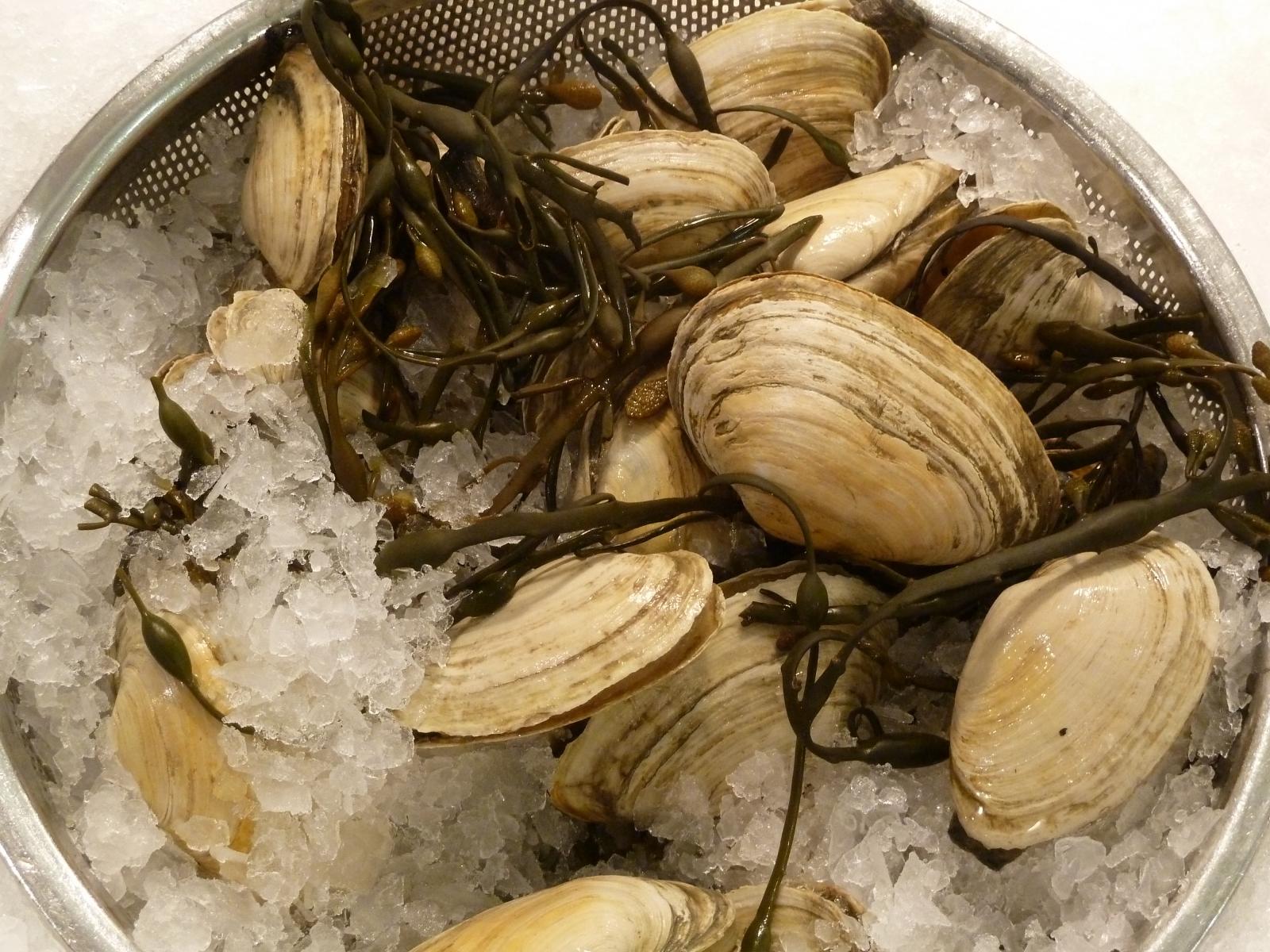 soft shell clams leukaemia