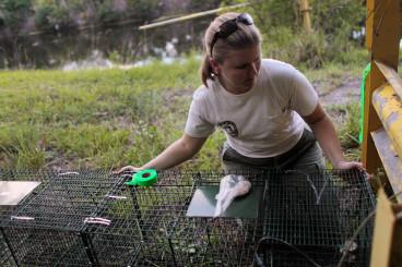 Monitor Lizard trap in Florida
