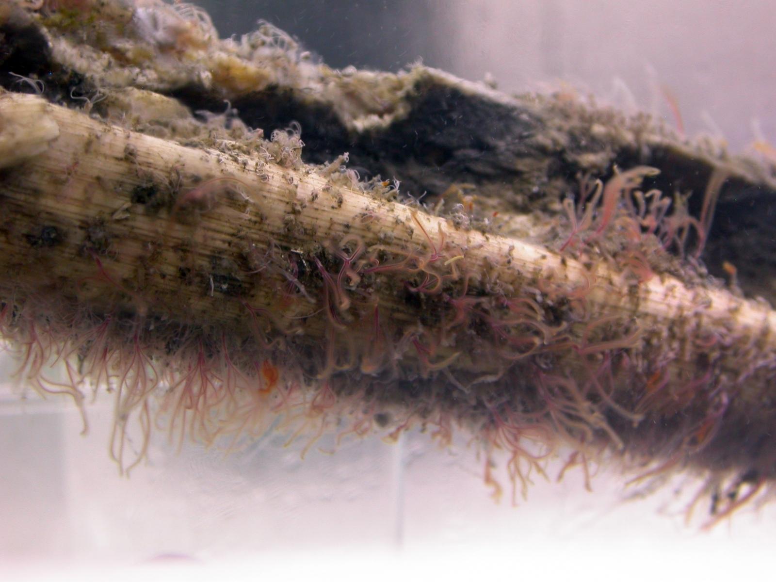 zombie worms