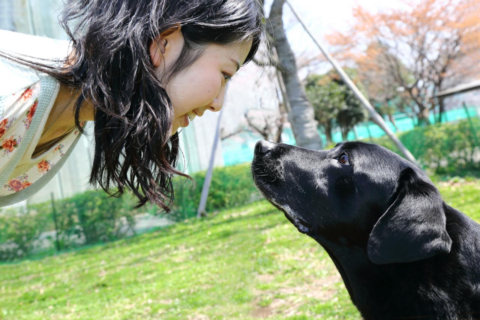 Eye Contact Dogs Humans oxytocin