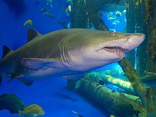 Texas aquarium accidentally kills hundreds of fish with ...