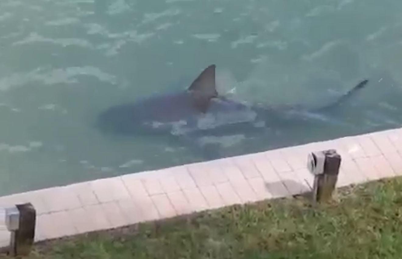 Shark swims into backyard in Florida