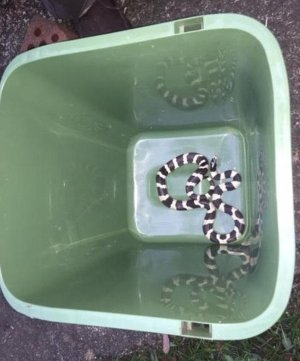 Snake found in oven