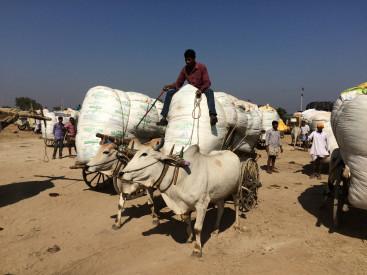 Cotton farmers in Telengana