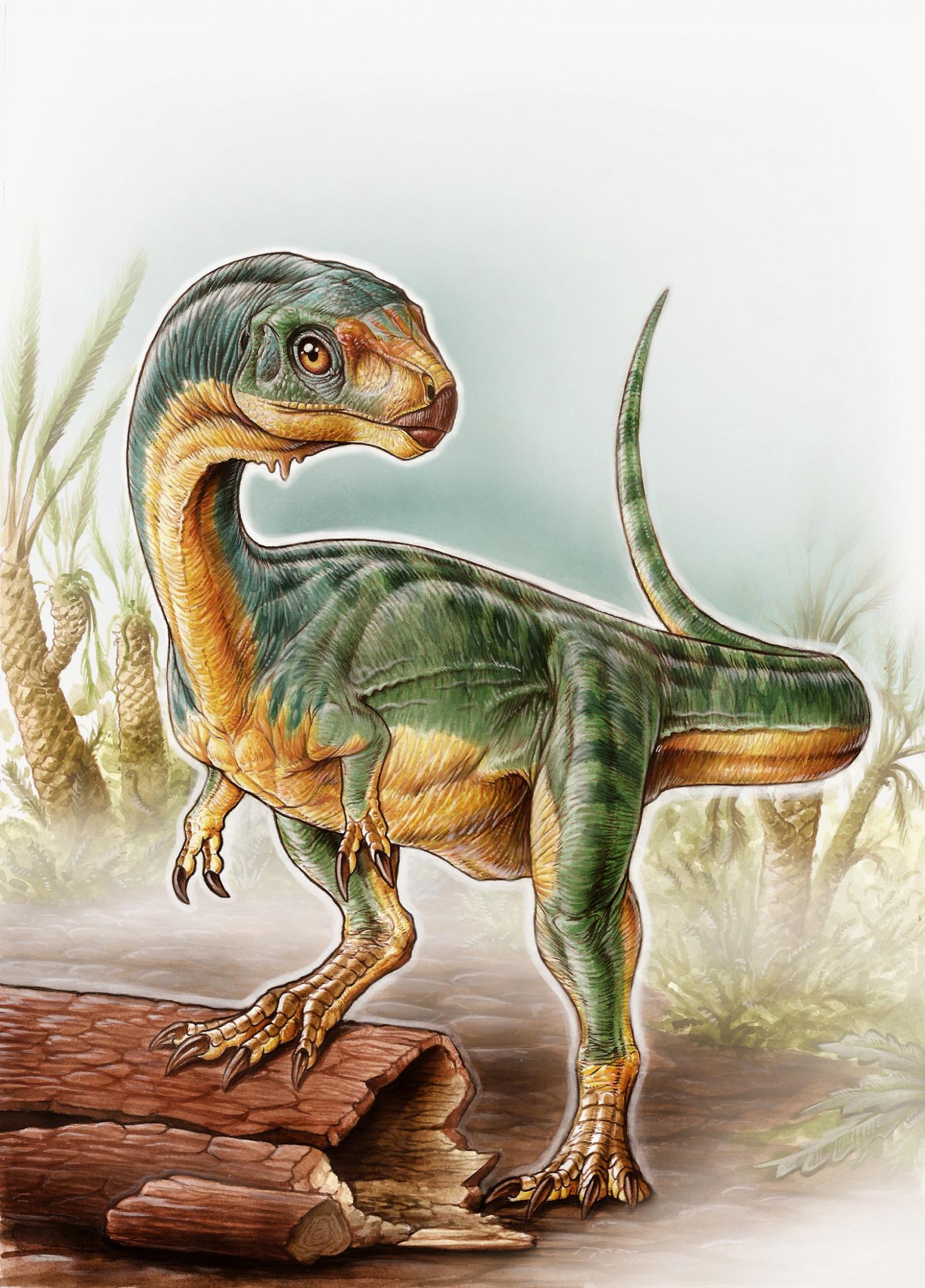 Chilesaurus dinosaur