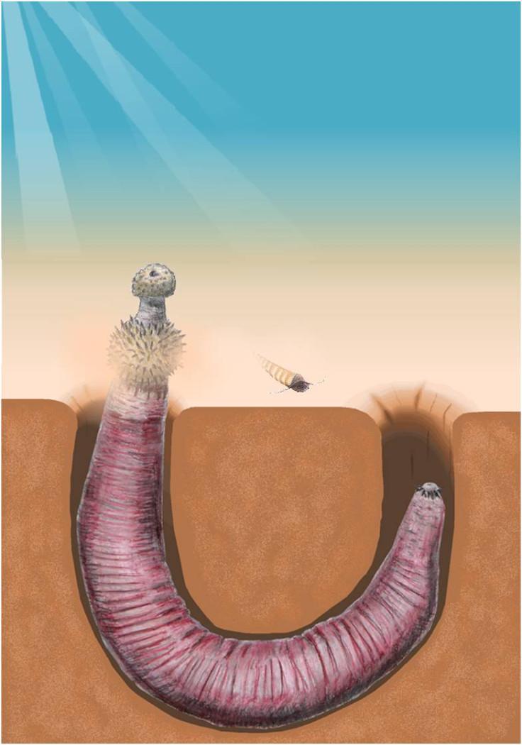 penis worm