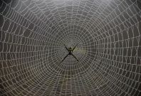 graphene spider carbon nanotubes