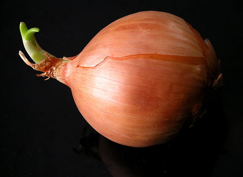 onion artificial muscle