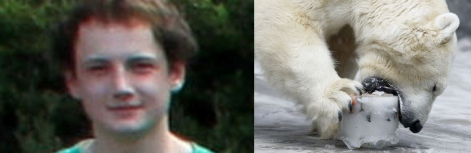 shocking Ordeal: 17-year old Killed by Polar Bear in the Arctic.