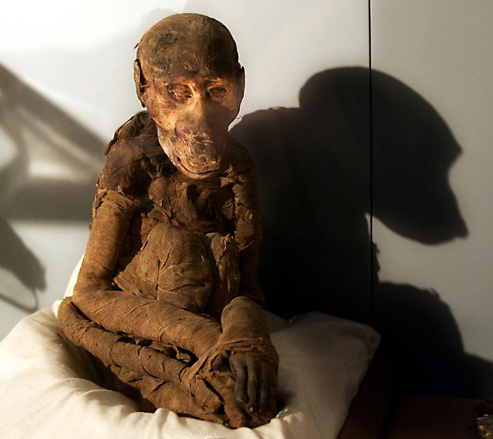 Mummified monkey