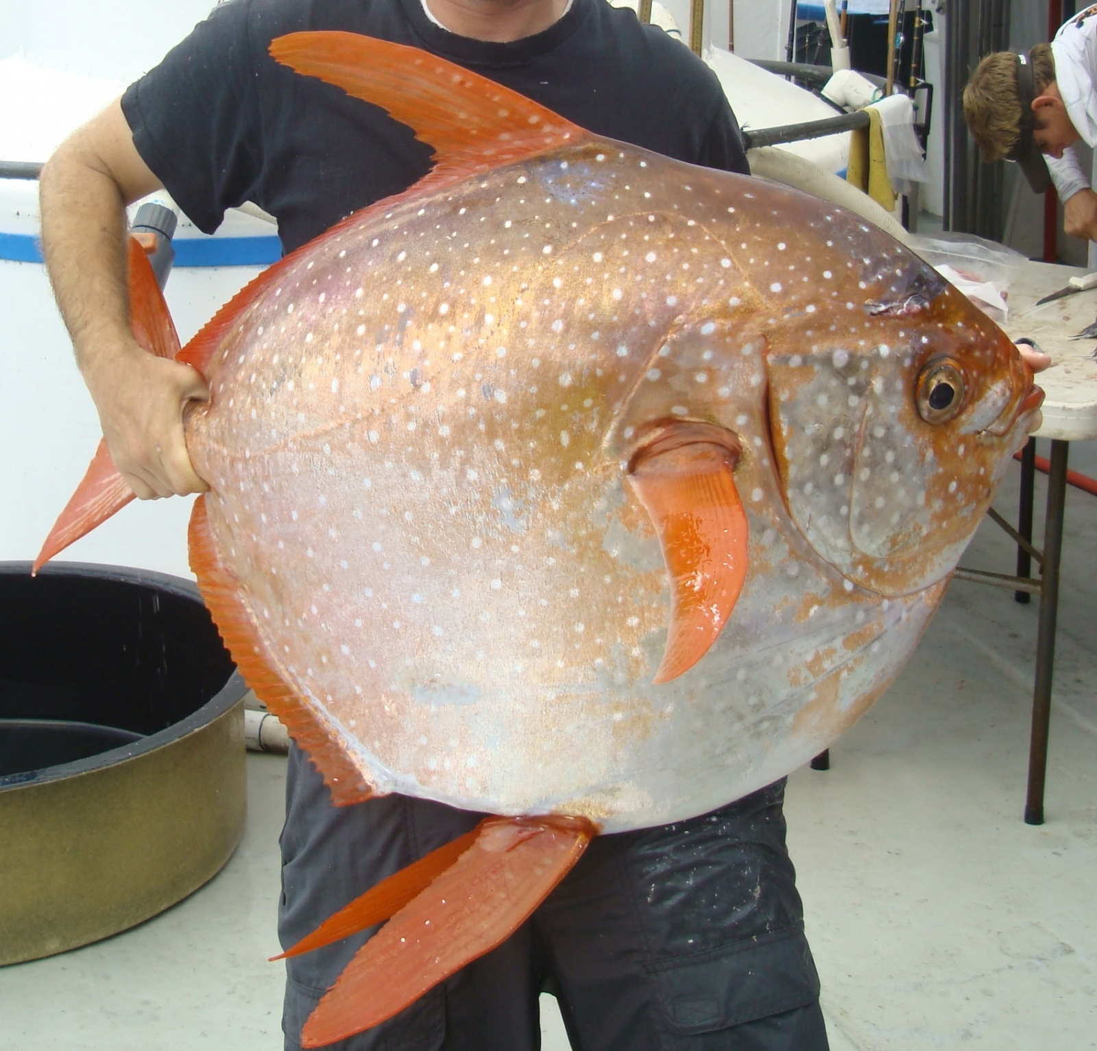 warm-blooded moonfish