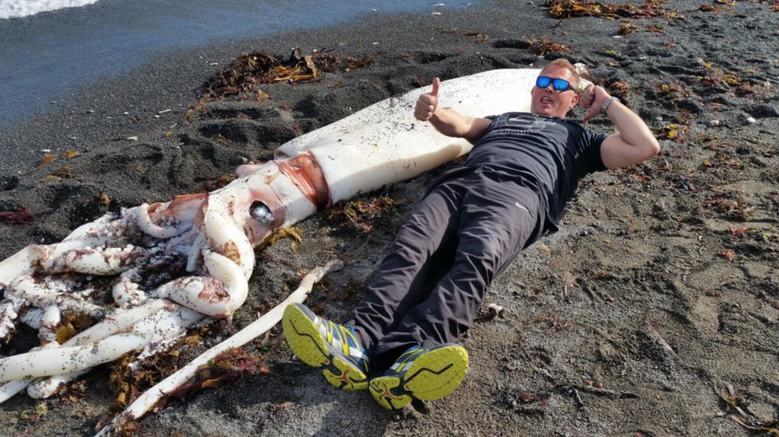 Giant squid found in New Zealand