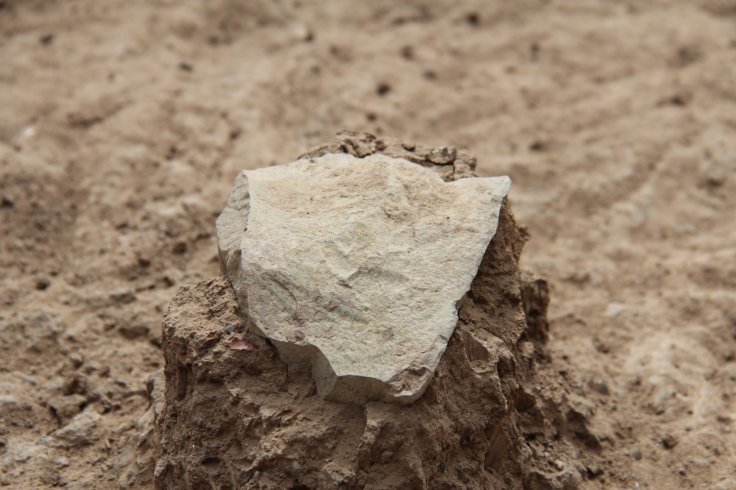 world's oldest stone tools