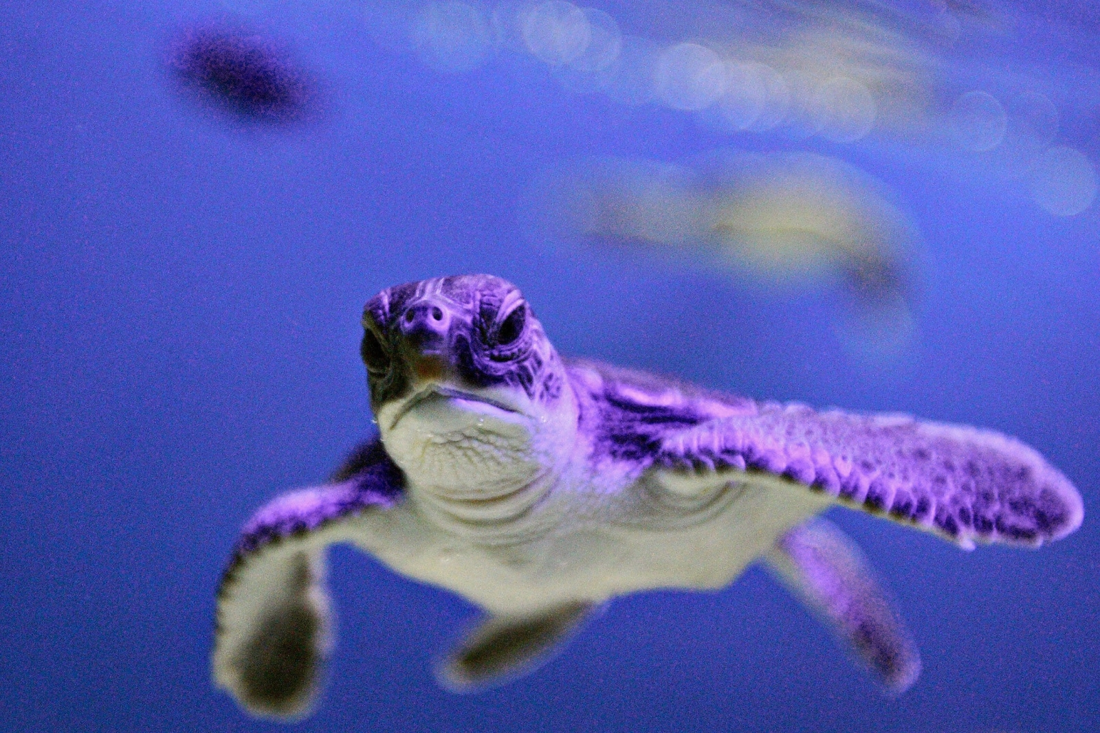World Turtle Day 2016: Why are sea turtles facing extinction?