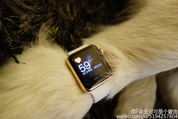 Apple Watch Editions owned by Chinese billionair'sdog