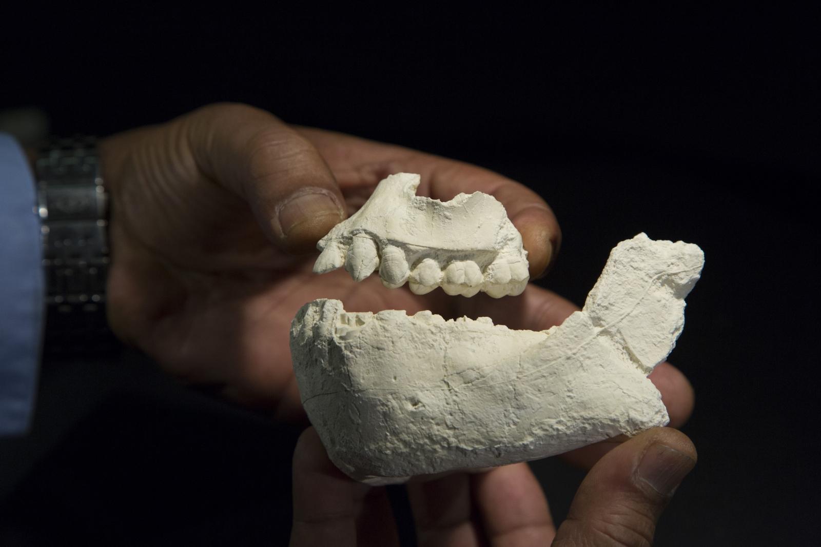 new hominin species
