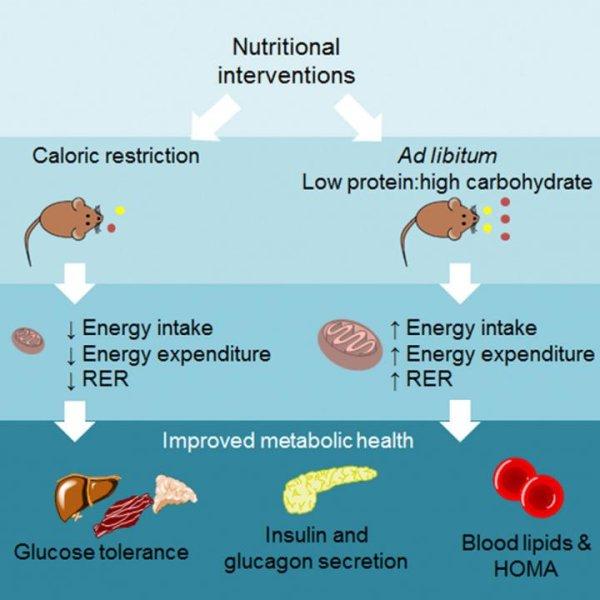 High Carb Low Fat Low Calorie Foods