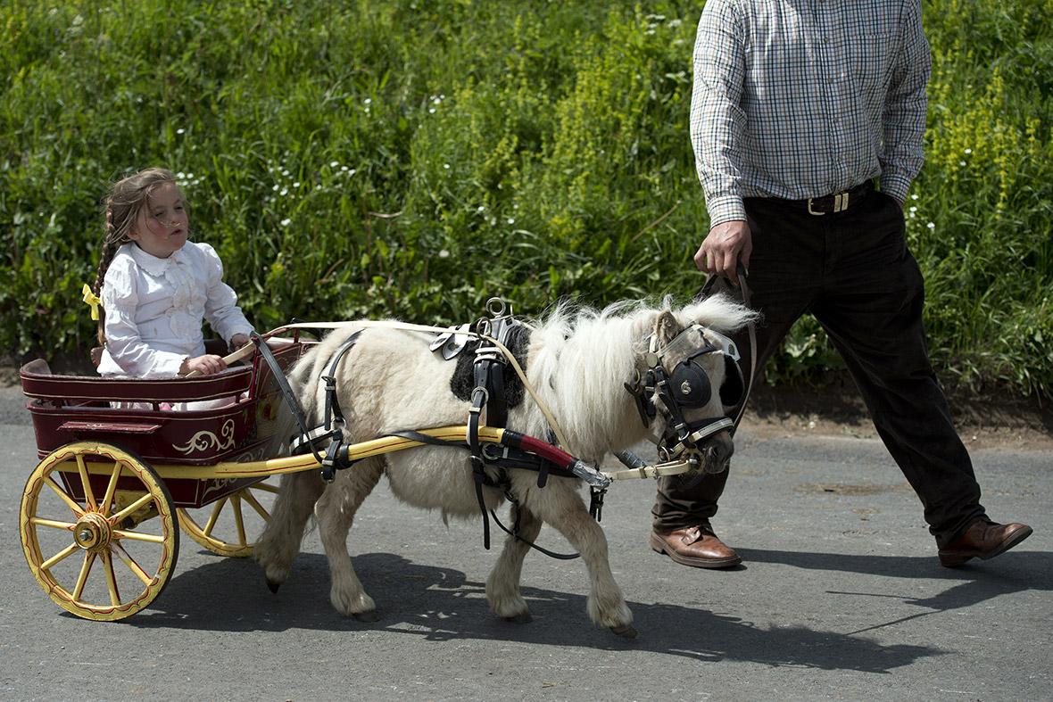 Traveller Horses For Sale