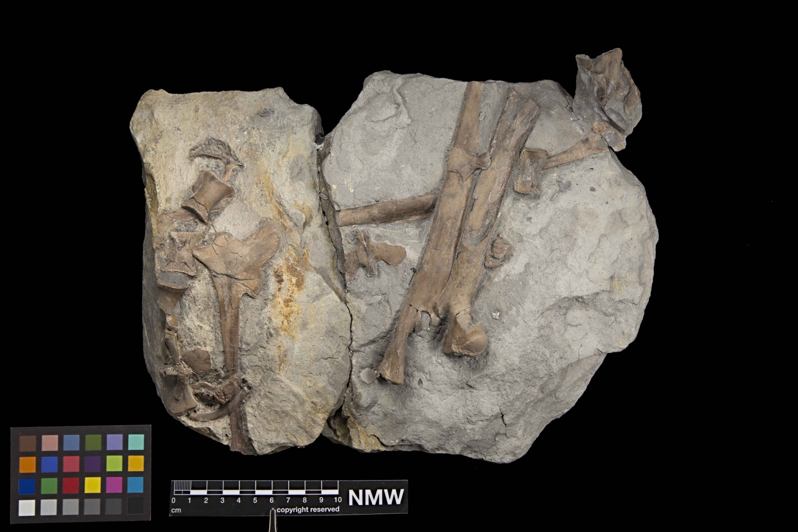Dinosaur fossils discovered in Wales