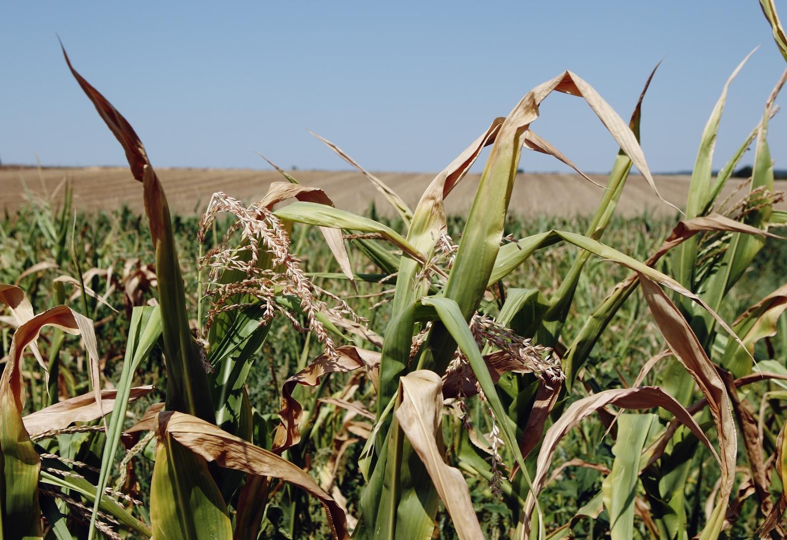 global warming plant growth