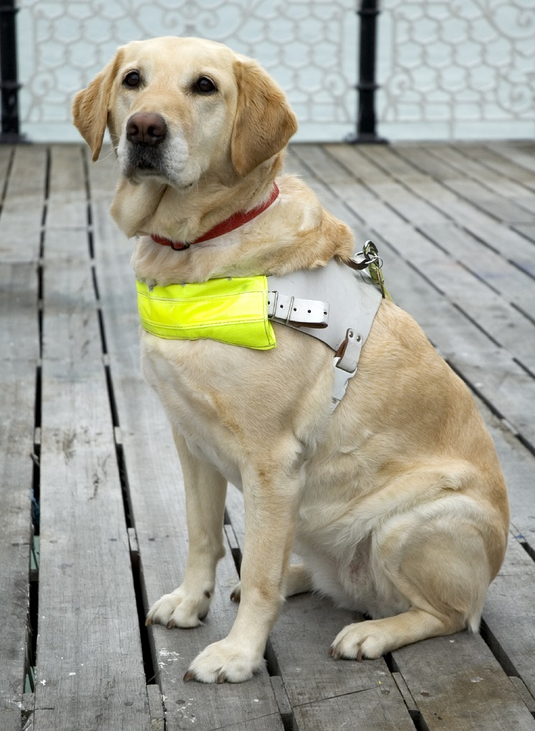 how to work with guide dogs