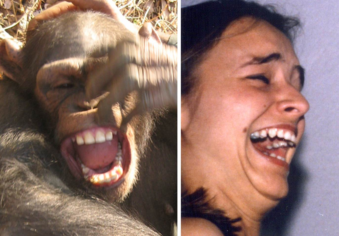 CHIMP SMILE
