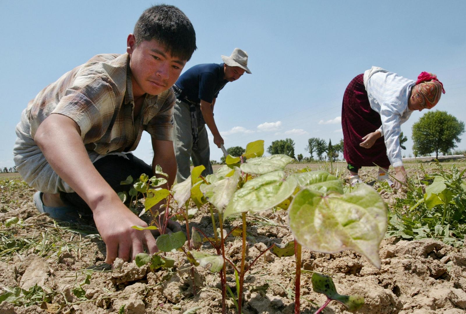 Uzbekistan child labour