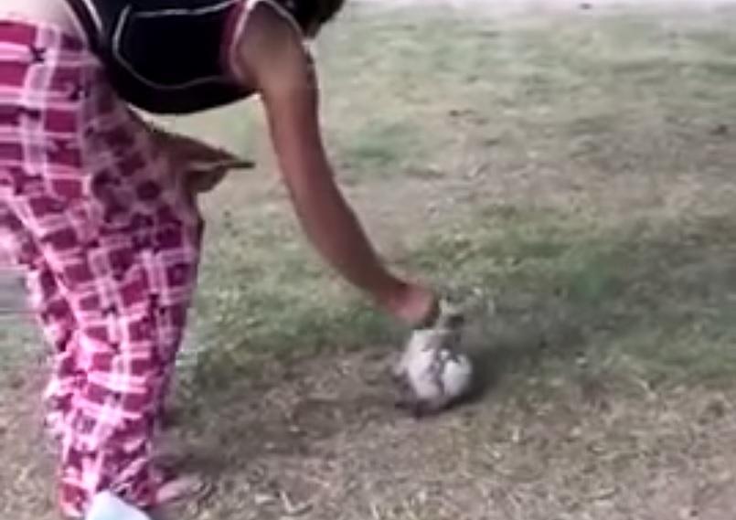 Mexican woman burns cat