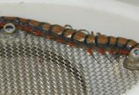 Curtley the giant Peruvian centipede