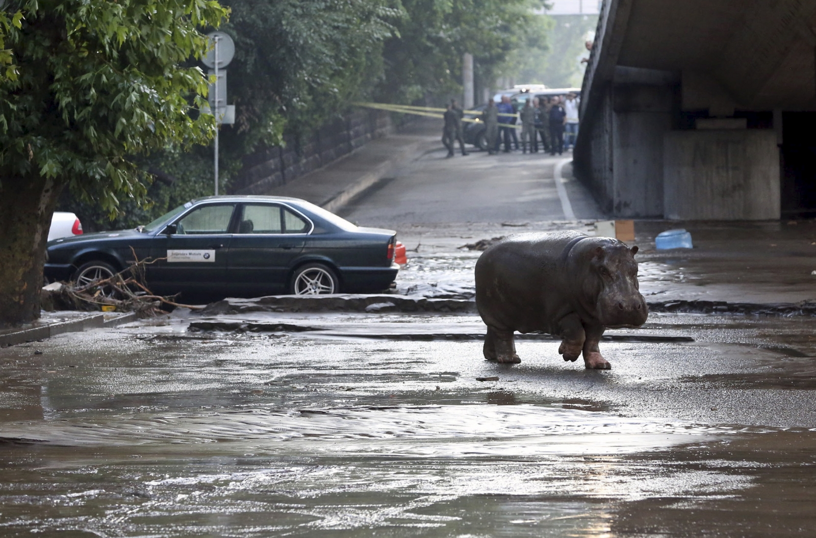 Animals flee from zoo