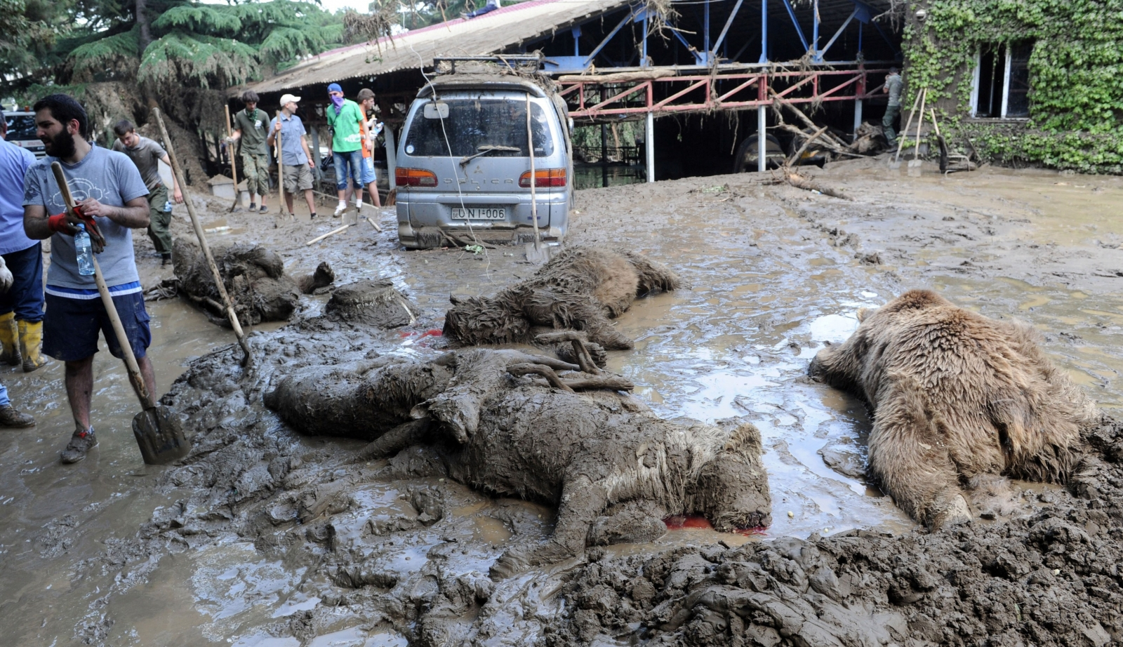 Bodies of dead animals recovered at Tbilisi
