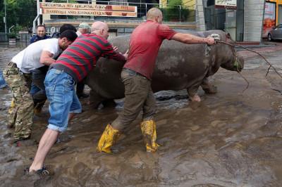 Tbilisi zoo flood lion